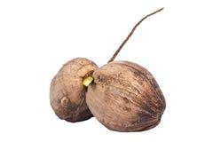 Twee ruwe kokosnoten Royalty-vrije Stock Foto's
