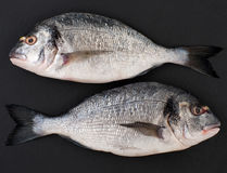 Twee ruwe vissen Dorado op een zwarte steenachtergrond Stock Afbeelding