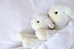 Twee schapen die in het bed liggen royalty-vrije stock afbeeldingen