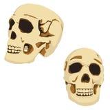 Twee schedels Royalty-vrije Stock Foto's
