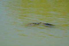 Twee schildpadden stock foto