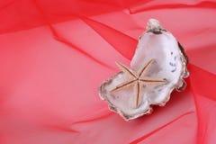 Twee shells Stock Afbeelding