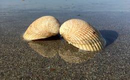 Twee shells spiegel in het water Stock Foto