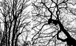 Twee silhouetten van bomen Stock Fotografie