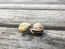 Twee slakken die op een woodengray lijst kussen stock afbeeldingen