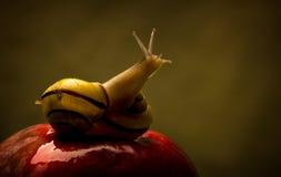 Twee slakken in liefde Royalty-vrije Stock Fotografie