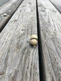 Twee slakken op de grijze houten vloeren royalty-vrije stock afbeelding