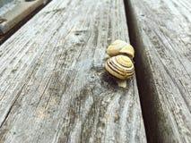 Twee slakken op de houten vloer stock afbeeldingen