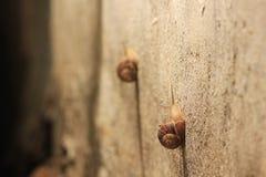 Twee slakken op de muur in de concurrentie die is Stock Fotografie