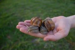 Twee slakken op de palm van een meisje stock fotografie