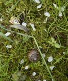Twee slakken in tuin royalty-vrije stock foto's