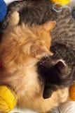 Twee slaperige katjes Royalty-vrije Stock Foto's