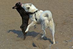 Twee speelse honden Stock Fotografie
