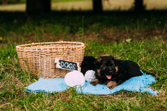 Twee Speelse Puppy Royalty-vrije Stock Foto