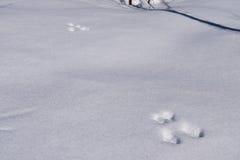 Twee sporen verlaten in de sneeuwhazen Stock Foto's