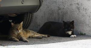 Twee Straat Cat Lying Under The Car stock videobeelden