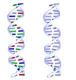 twee structuren van DNA op witte achtergrond Royalty-vrije Stock Foto's