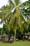 Twee sunbeds door een palm bij een toevlucht Stock Afbeeldingen