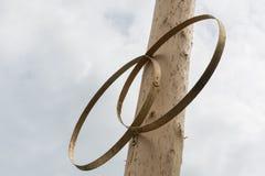 Twee symbolische ringen op houten boom Stock Afbeeldingen