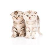 Twee taby katjes vooraan Geïsoleerdj op witte achtergrond Stock Foto's