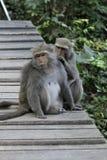 Twee Taiwan macaques Royalty-vrije Stock Fotografie