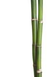 Twee takken van bamboe Stock Afbeeldingen