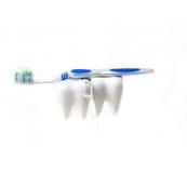 Twee tanden en borstel die op wit worden geïsoleerd stock afbeelding