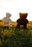 Twee teddyberen op een groene weide ontmoeten de zonsondergang stock afbeeldingen