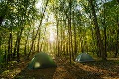 Twee tentenkamp in het midden van een mooi bos Royalty-vrije Stock Fotografie