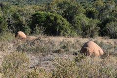 Twee Termietheuvels op de manier aan de Swartberg-Pas in Oudtshoorn in Zuid-Afrika royalty-vrije stock foto