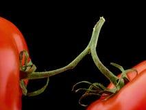 Twee tomaten op stam Royalty-vrije Stock Afbeelding