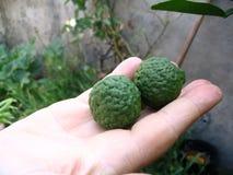 Twee tropische Bergamotkalk Stock Foto's