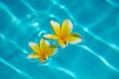 Twee tropische bloemen Stock Foto