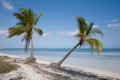 Twee tropische palmen op een strand Stock Foto