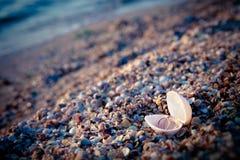 Twee trouwringen in shell Royalty-vrije Stock Foto's