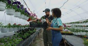 Twee tuinlieden die bloemen selecteren stock video
