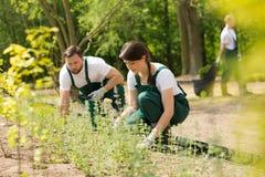 Twee tuinlieden die nieuwe installaties plaatsen royalty-vrije stock foto's