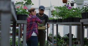Twee tuinlieden die zaailingen in serre selecteren stock videobeelden