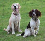 Twee van een hond vrienden Stock Foto's