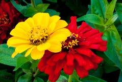 Twee van een soort door de lente wordt bestrooid die royalty-vrije stock fotografie
