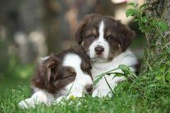 Twee verbazende puppy die samen in het gras liggen Stock Afbeeldingen