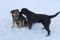 Twee verdwaalde honden die in de sneeuw zitten stock fotografie
