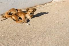 Twee verlieten Kleine Bruine Honden royalty-vrije stock foto