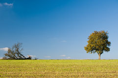 Twee Verschillende Bomen Royalty-vrije Stock Afbeeldingen