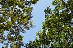 Twee Verschillende Bomen Stock Foto