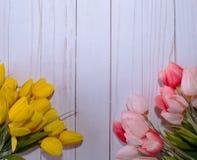 Twee verschillende reeksen tulpen met een witte achtergrond Stock Foto's