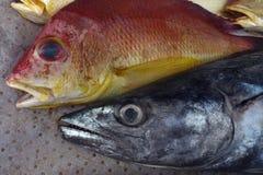 Twee verse overzeese vissen voor verkoop bij achtergrondwasdoek: rode bovenkant met blauwe ogen en open mond, met een lange grijz Royalty-vrije Stock Fotografie