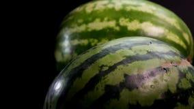 Twee verse smakelijke watermeloenen stock footage