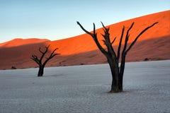 Twee versteende boom tegen rode duinen Royalty-vrije Stock Foto