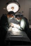 Twee veterinaire chirurgen in werkende ruimte Stock Foto's